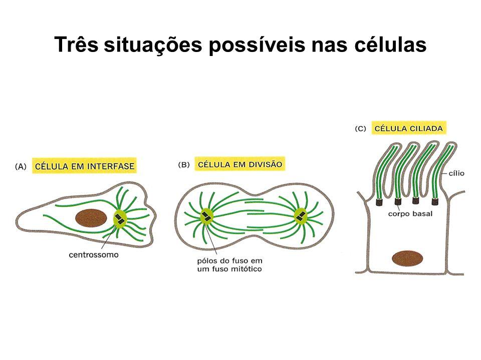 Três situações possíveis nas células