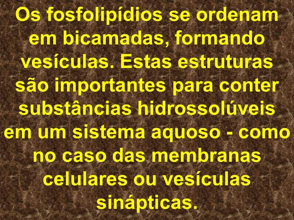 Os fosfolipídios se ordenam em bicamadas, formando vesículas. Estas estruturas são importantes para conter substâncias hidrossolúveis em um sistema aq