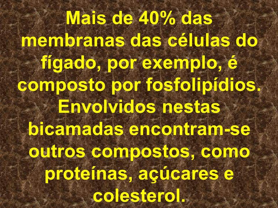 Mais de 40% das membranas das células do fígado, por exemplo, é composto por fosfolipídios. Envolvidos nestas bicamadas encontram-se outros compostos,