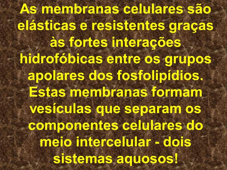 As membranas celulares são elásticas e resistentes graças às fortes interações hidrofóbicas entre os grupos apolares dos fosfolipídios. Estas membrana