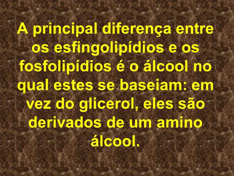 A principal diferença entre os esfingolipídios e os fosfolipídios é o álcool no qual estes se baseiam: em vez do glicerol, eles são derivados de um am