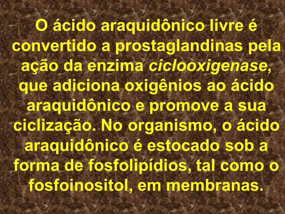 O ácido araquidônico livre é convertido a prostaglandinas pela ação da enzima ciclooxigenase, que adiciona oxigênios ao ácido araquidônico e promove a