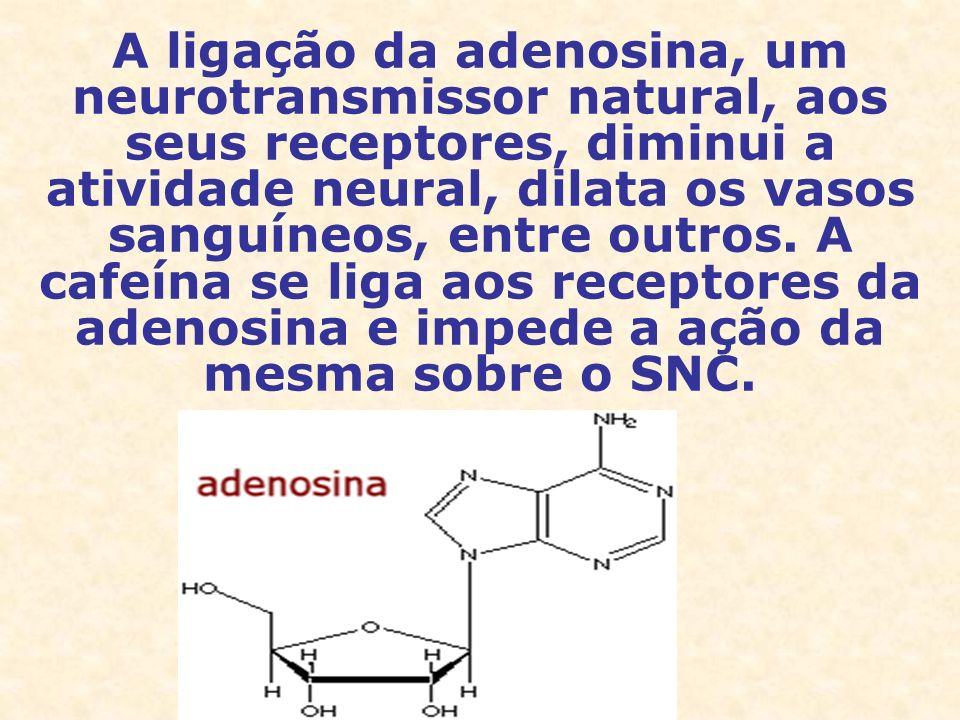 A ligação da adenosina, um neurotransmissor natural, aos seus receptores, diminui a atividade neural, dilata os vasos sanguíneos, entre outros. A cafe