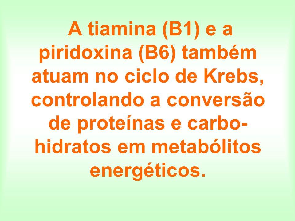 A tiamina (B1) e a piridoxina (B6) também atuam no ciclo de Krebs, controlando a conversão de proteínas e carbo- hidratos em metabólitos energéticos.