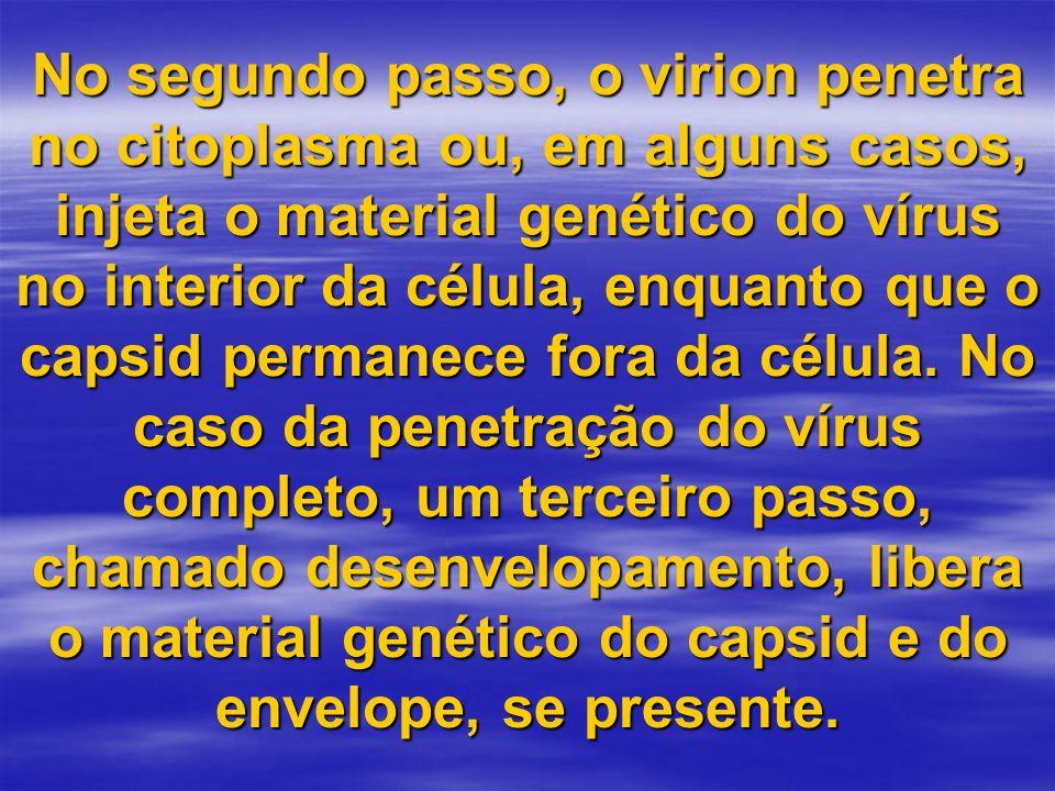 No segundo passo, o virion penetra no citoplasma ou, em alguns casos, injeta o material genético do vírus no interior da célula, enquanto que o capsid