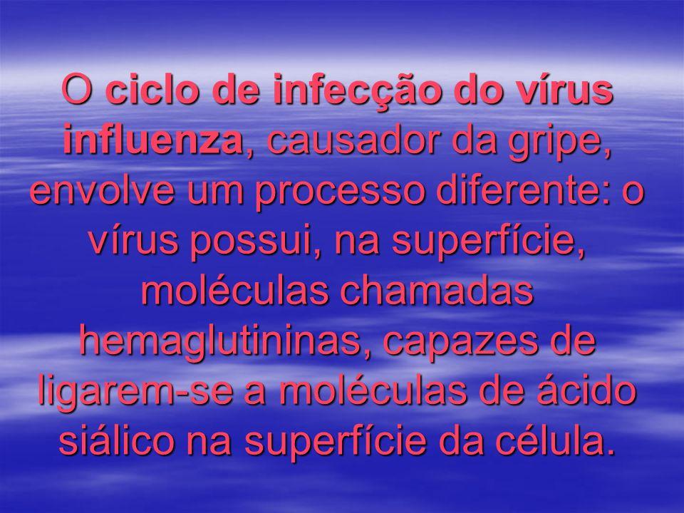 O ciclo de infecção do vírus influenza, causador da gripe, envolve um processo diferente: o vírus possui, na superfície, moléculas chamadas hemaglutin