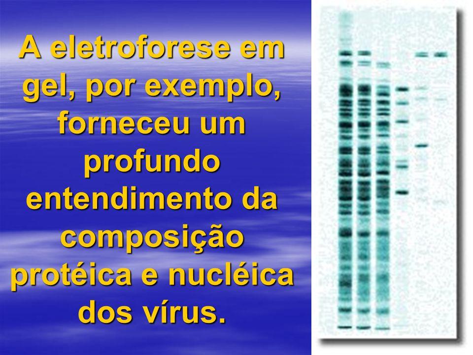 A eletroforese em gel, por exemplo, forneceu um profundo entendimento da composição protéica e nucléica dos vírus.
