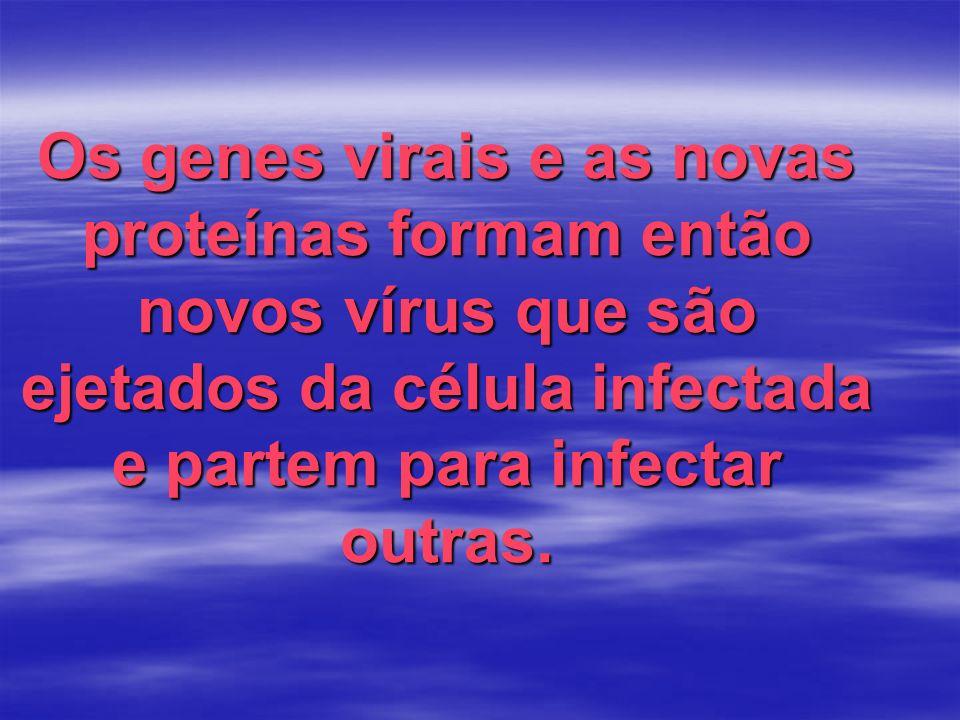 Os genes virais e as novas proteínas formam então novos vírus que são ejetados da célula infectada e partem para infectar outras.