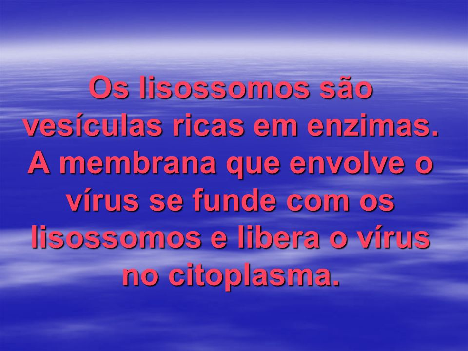 Os lisossomos são vesículas ricas em enzimas. A membrana que envolve o vírus se funde com os lisossomos e libera o vírus no citoplasma.