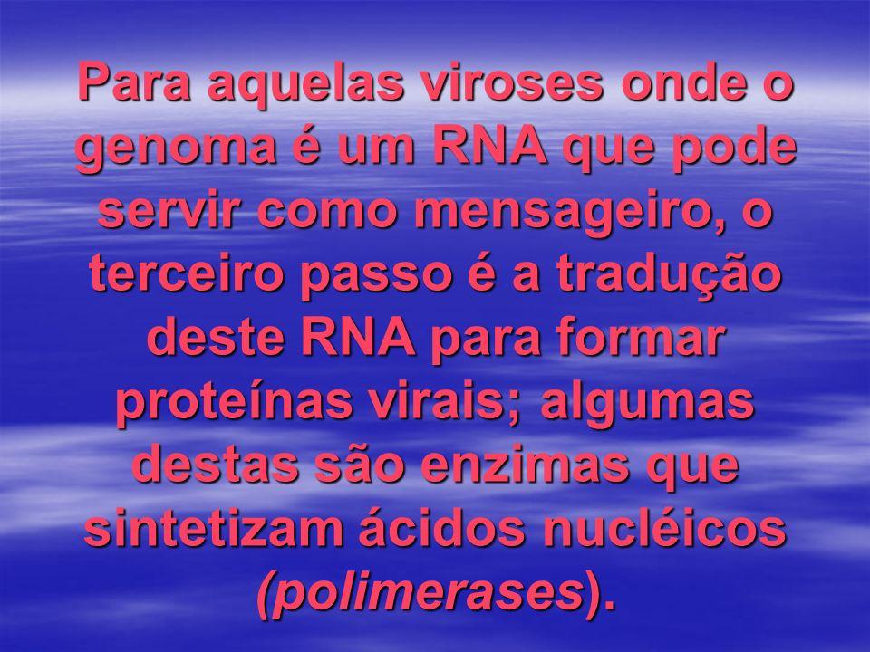 Para aquelas viroses onde o genoma é um RNA que pode servir como mensageiro, o terceiro passo é a tradução deste RNA para formar proteínas virais; alg