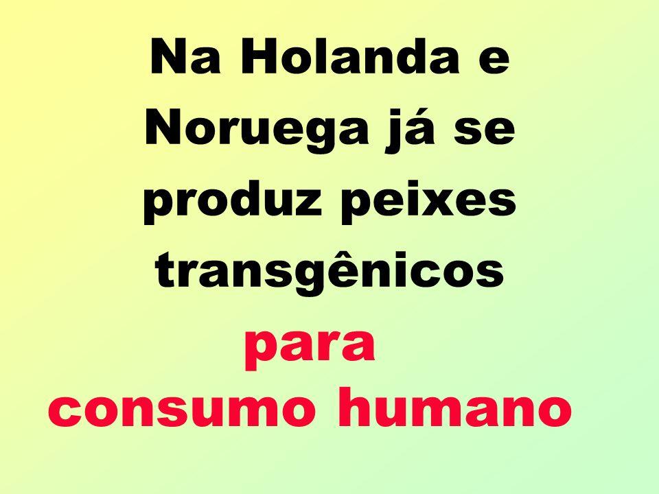 Na Holanda e Noruega já se produz peixes transgênicos para consumo humano