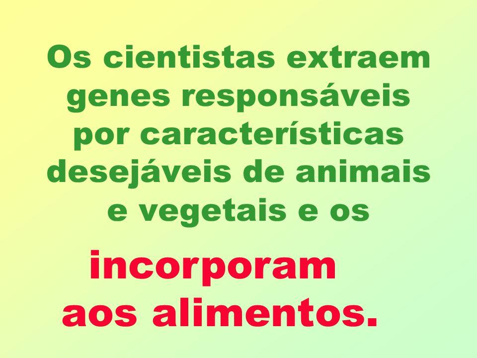 Os cientistas extraem genes responsáveis por características desejáveis de animais e vegetais e os incorporam aos alimentos.