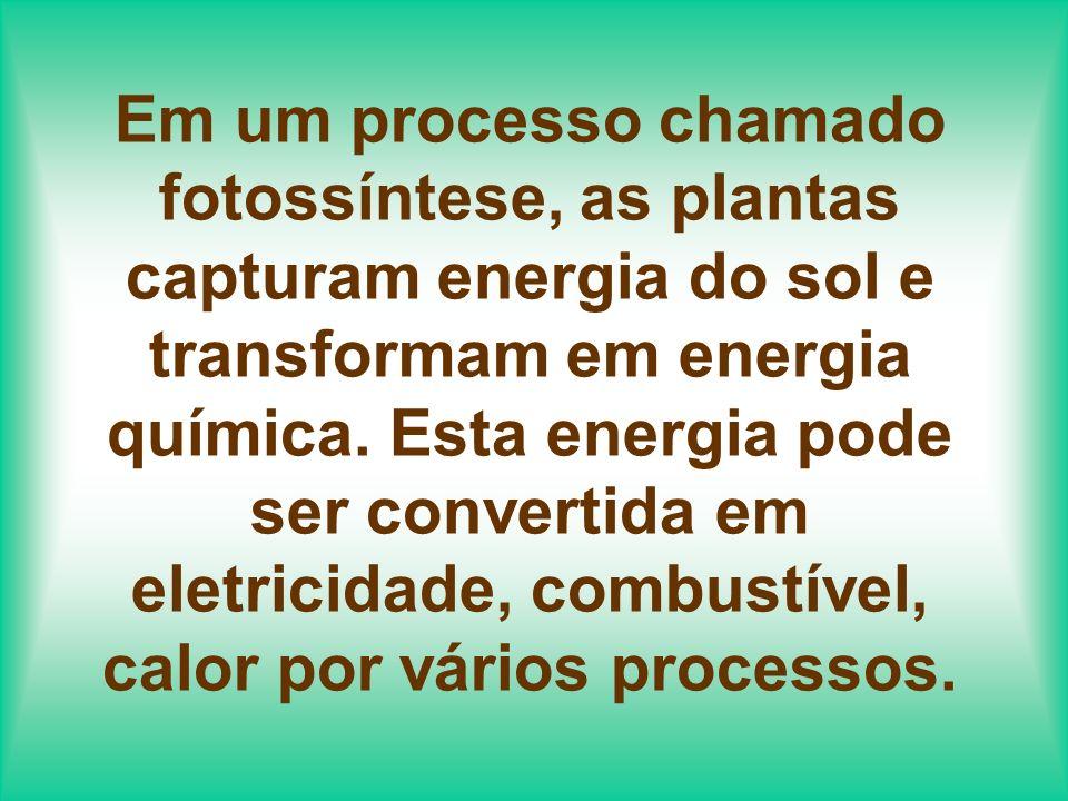 As fontes orgânicas que são usadas para produzir energias usando estes processos são chamadas de Biomassa.