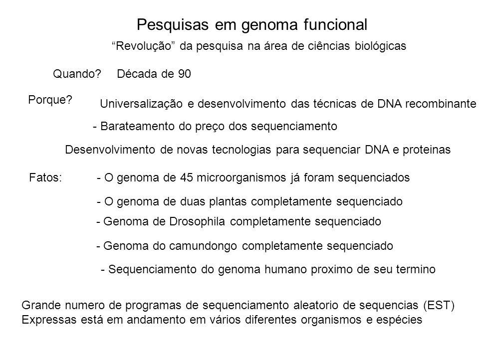 Pesquisas em genoma funcional - O genoma de 45 microorganismos já foram sequenciados - O genoma de duas plantas completamente sequenciado - Genoma de