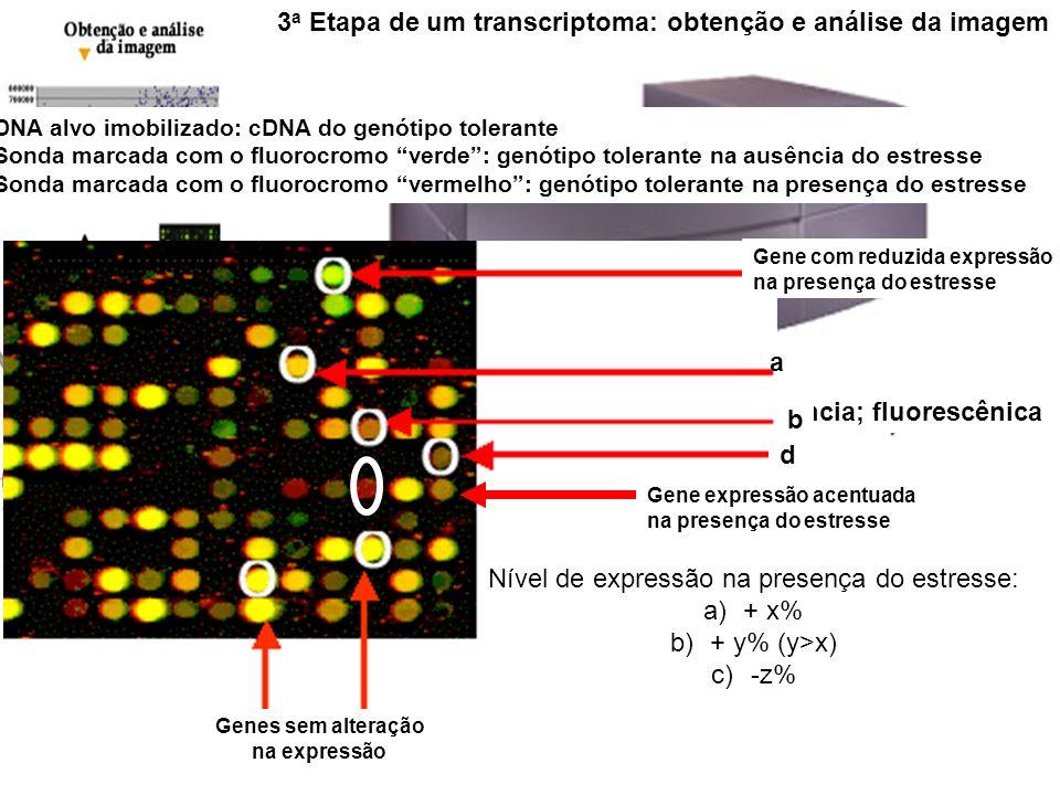 3 a Etapa de um transcriptoma: obtenção e análise da imagem Typhoon: Fosforescência,quimioluminescência; fluorescênica DNA alvo imobilizado: cDNA do g