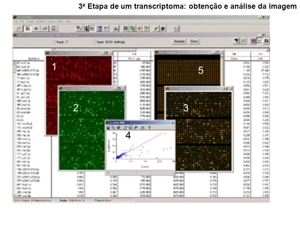 3 a Etapa de um transcriptoma: obtenção e análise da imagem 1 1 23 4 5