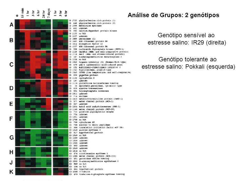 Análise de Grupos: 2 genótipos Genótipo sensível ao estresse salino: IR29 (direita) Genótipo tolerante ao estresse salino: Pokkali (esquerda)
