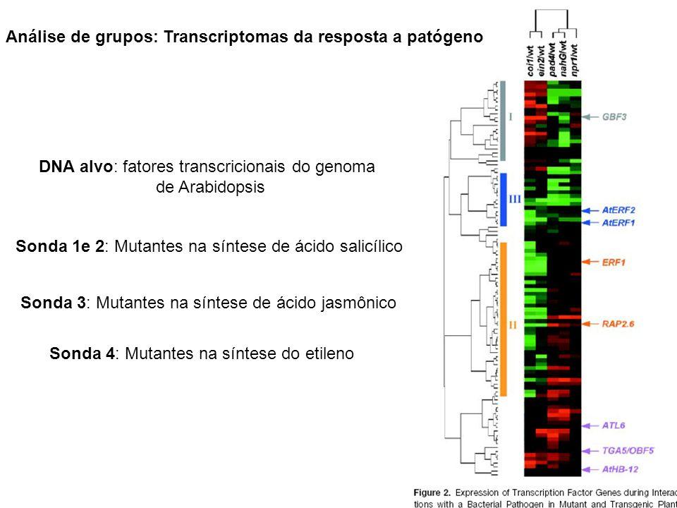 Análise de grupos: Transcriptomas da resposta a patógeno Sonda 1e 2: Mutantes na síntese de ácido salicílico Sonda 3: Mutantes na síntese de ácido jas