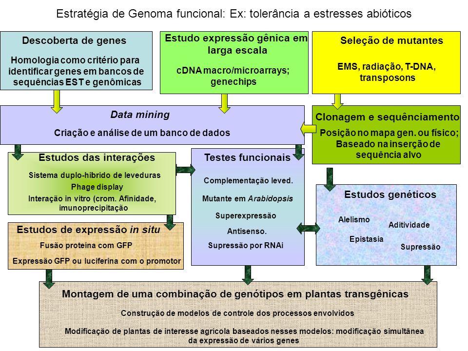 Montagem de uma combinação de genótipos em plantas transgênicas Estudos genéticos Testes funcionais Estudos de expressão in situ Estudos das interaçõe