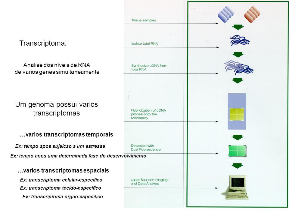 Transcriptoma: Análise dos níveis de RNA de varios genes simultaneamente Um genoma possui varios transcriptomas …varios transcriptomas temporais Ex: t