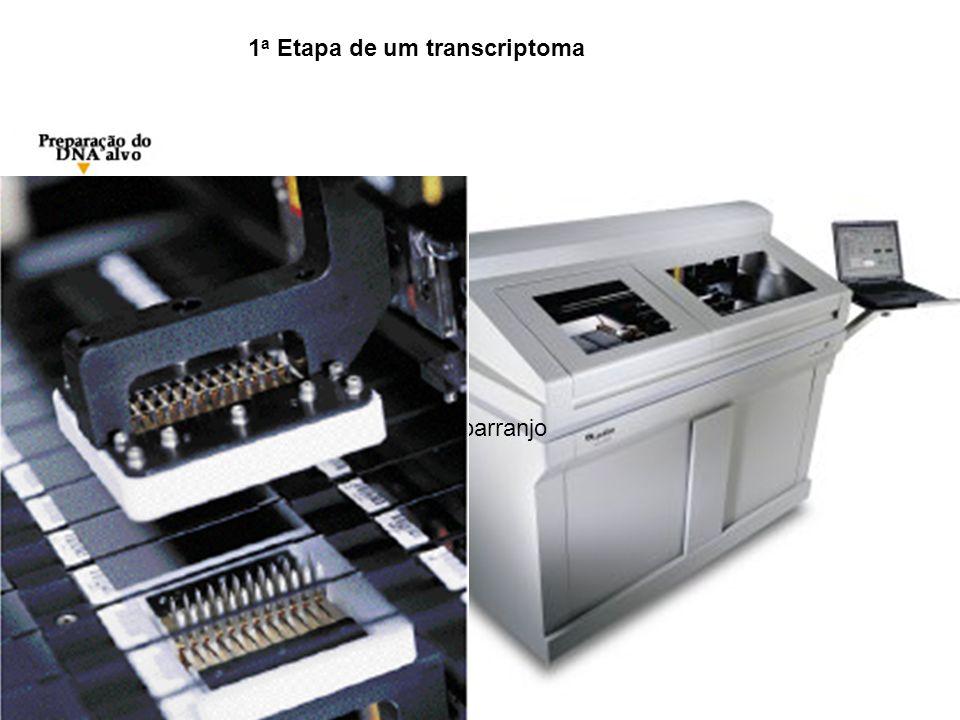 Isolamento de DNA do banco de cDNA 1 a Etapa de um transcriptoma Preparacao do Micro/Macroarranjo (Micro/macroarray)