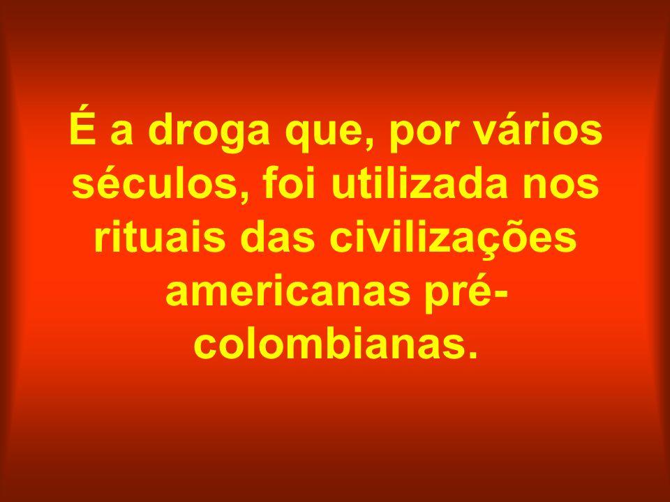 É a droga que, por vários séculos, foi utilizada nos rituais das civilizações americanas pré- colombianas.