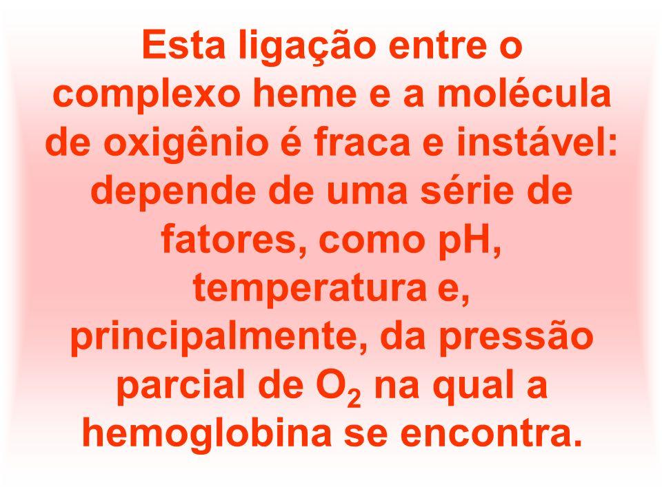 A estrutura da hemoglobina permite que ela se ligue a 4 moléculas de O 2 simultaneamente.