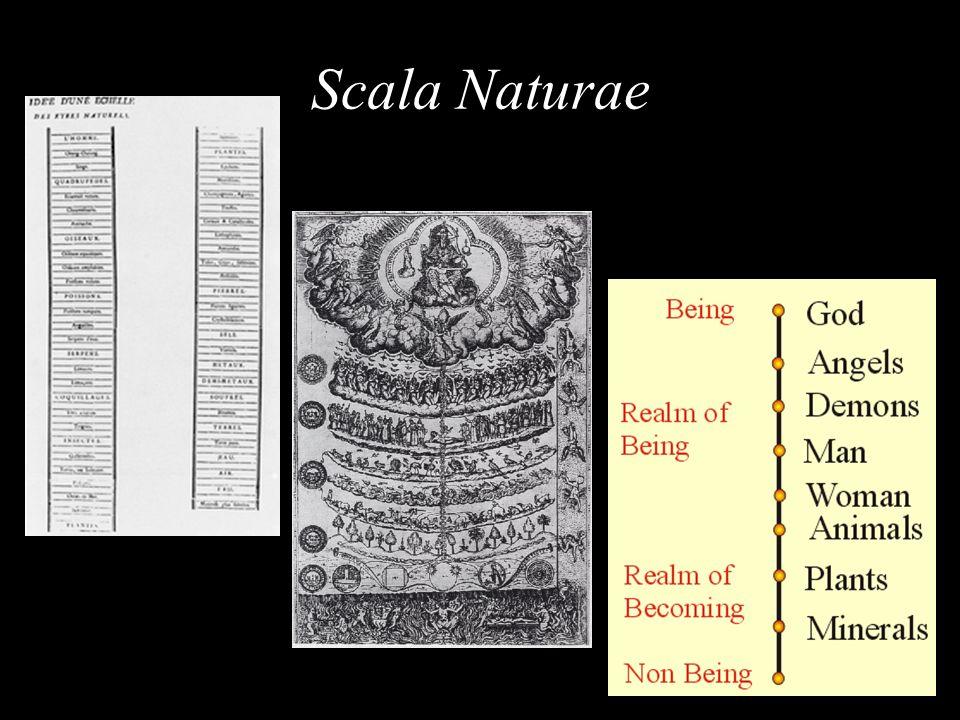 Scala Naturae