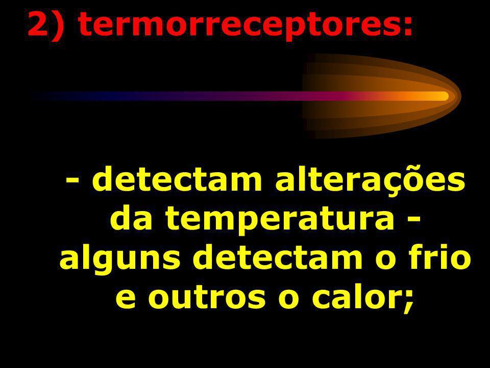 - detectam deformações mecânicas dos receptores ou de células adjacentes; 1) mecanorreceptores: