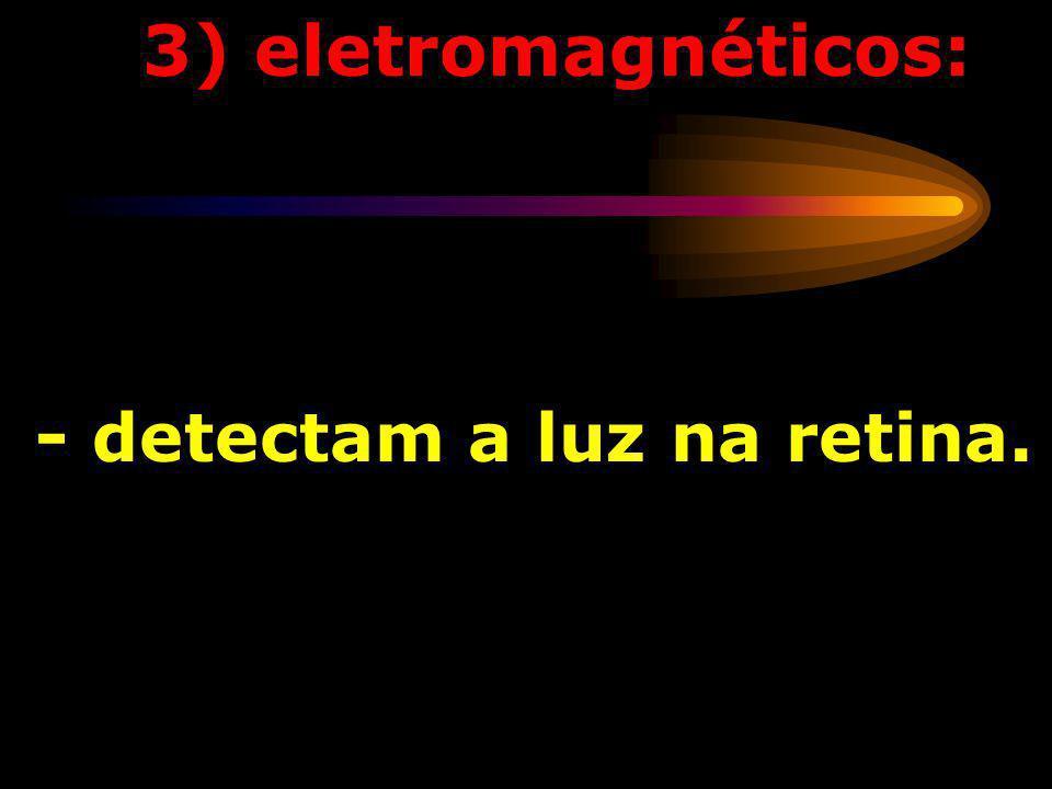 2) termorreceptores: - detectam alterações da temperatura - alguns detectam o frio e outros o calor;