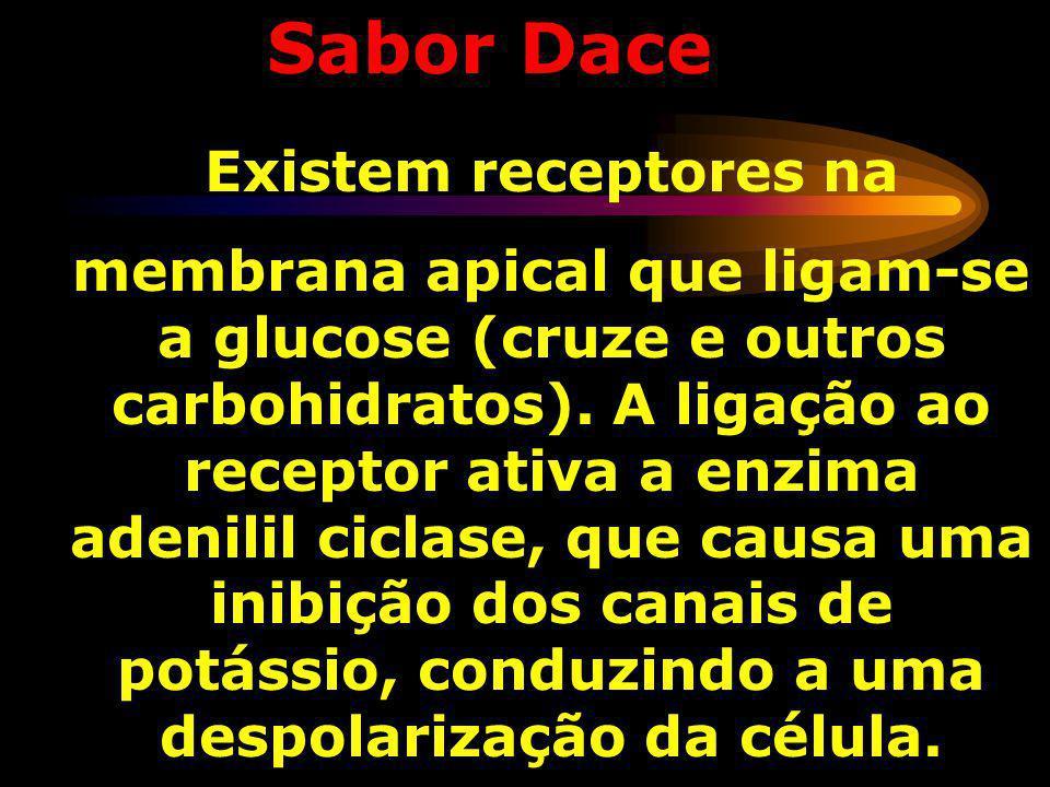 Sabor Azedo: A espécie detectada é o íon H +. Os íons H + bloqueiam a entrada dos canais de potássio (K + ). Estes canais são responsáveis por manter