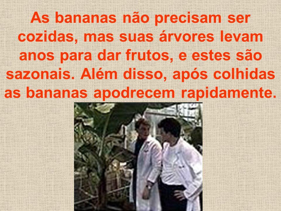 As bananas não precisam ser cozidas, mas suas árvores levam anos para dar frutos, e estes são sazonais. Além disso, após colhidas as bananas apodrecem