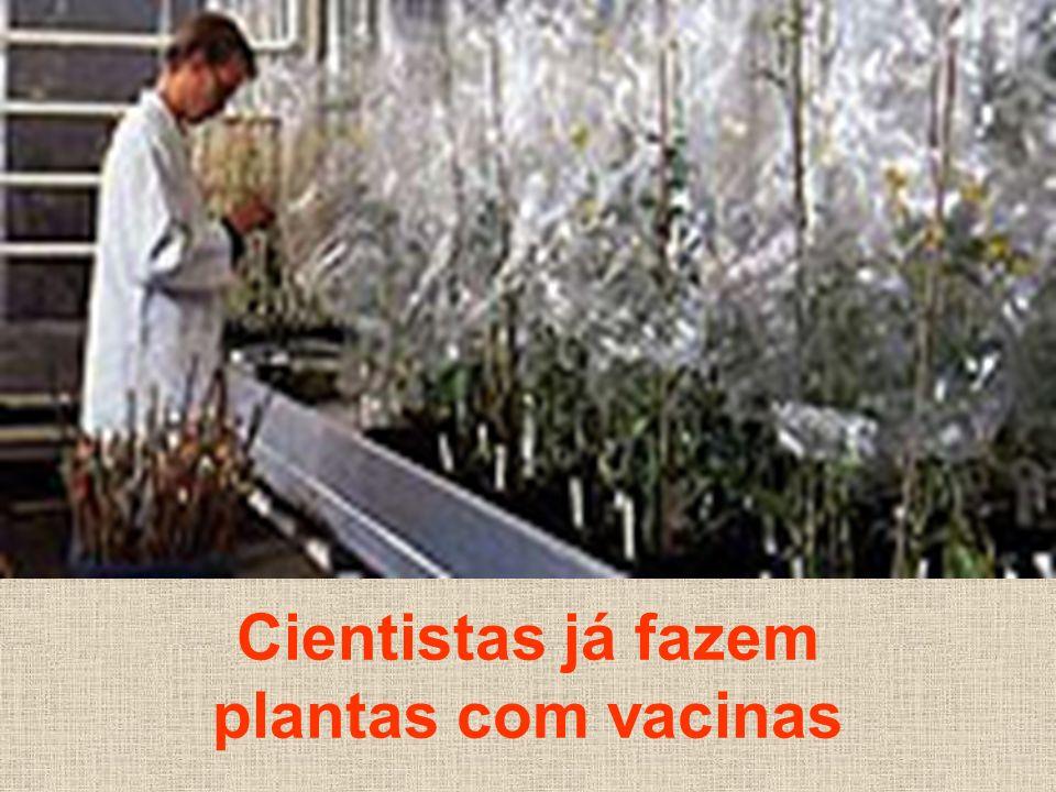 Cientistas já fazem plantas com vacinas
