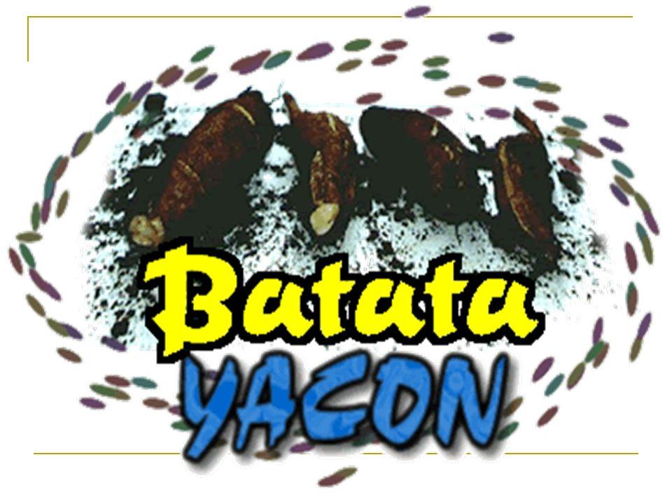 Já pensou em emagrecer comendo batata? Fácil, se a batata for a Yacon: uma batata diet!