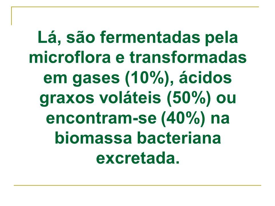 Lá, são fermentadas pela microflora e transformadas em gases (10%), ácidos graxos voláteis (50%) ou encontram-se (40%) na biomassa bacteriana excretad