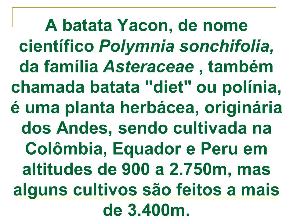 A batata Yacon, de nome científico Polymnia sonchifolia, da família Asteraceae, também chamada batata