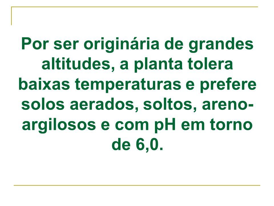 Por ser originária de grandes altitudes, a planta tolera baixas temperaturas e prefere solos aerados, soltos, areno- argilosos e com pH em torno de 6,
