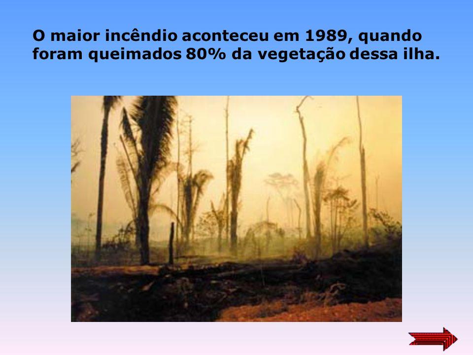 Incêndio destrói 2,5 mil hectares de mata no Paraná 23/09/2003 Curitiba - Um incêndio na Ilha Grande, a maior do arquipélago que forma o Parque Nacion