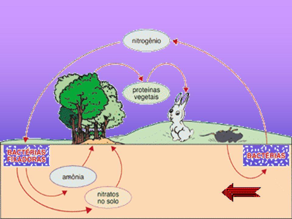 O nitrogênio constitui aproximadamente 79% de nossa atmosfera.Os organismos vivos, excetuando-se algumas bactérias e algas, não conseguem fixá-lo dire