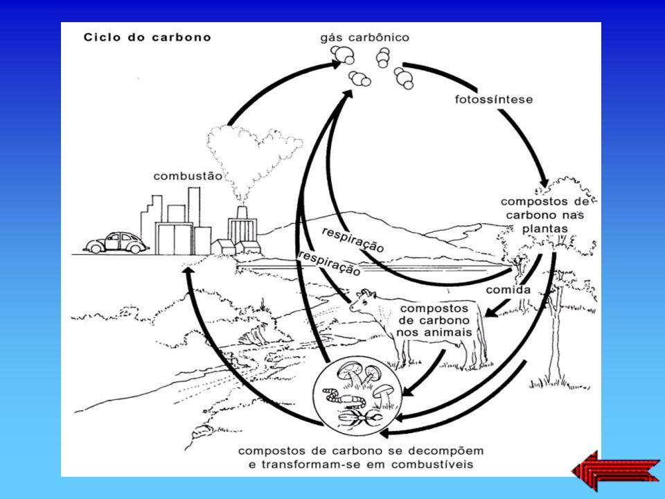 O carbono desempenha um papel fundamental para a vida através do que é vulgarmente chamado ciclo do carbono. O dióxido de carbono do ar juntamente com