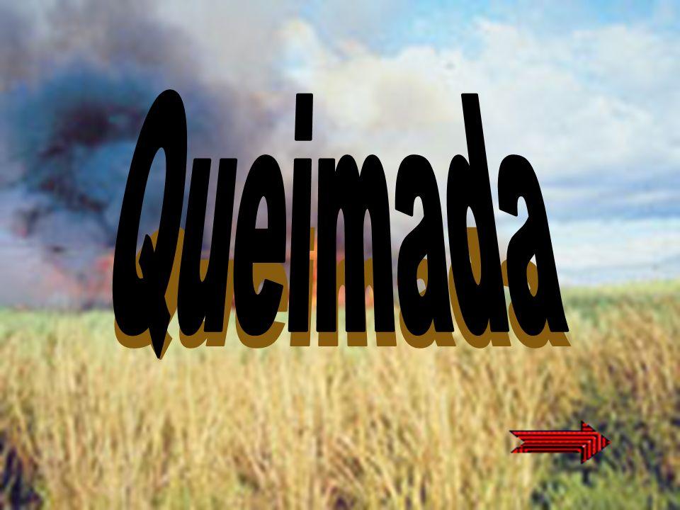A Amazônia enfrenta problemas com as queimadas.