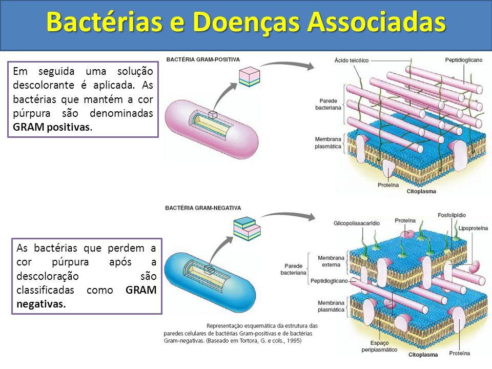 A coloração de GRAM foi desenvolvida em 1984 pelo bacteriologista dinamarquês Hans Gram. Utilizando corantes a base de iodo as bactérias são coradas d