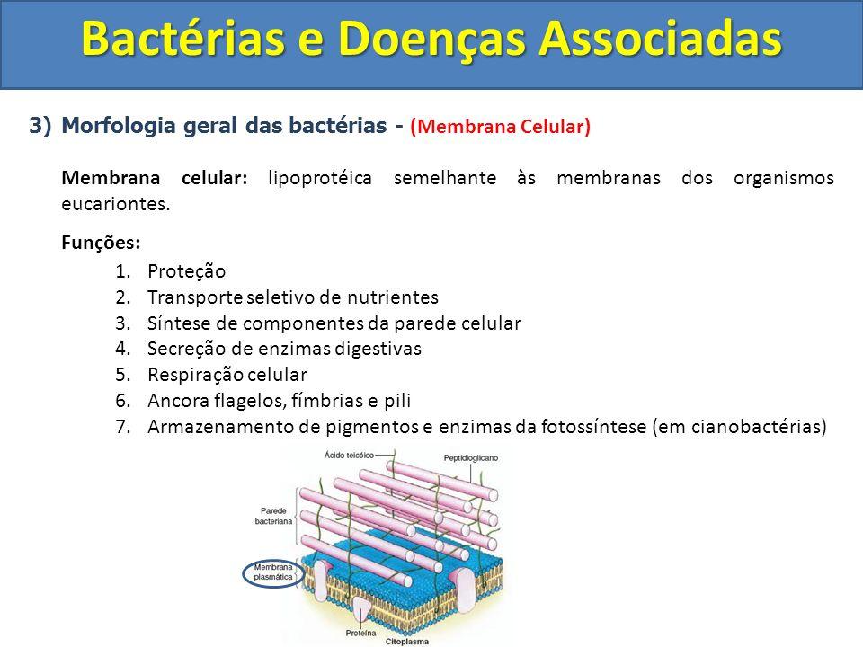 3)Morfologia geral das bactérias - (Membrana Celular) Membrana celular: lipoprotéica semelhante às membranas dos organismos eucariontes. Funções: 1.Pr