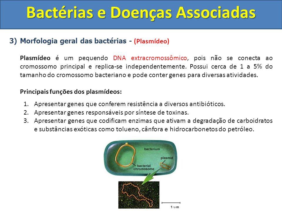 3)Morfologia geral das bactérias - (Plasmídeo) Plasmídeo é um pequendo DNA extracromossômico, pois não se conecta ao cromossomo principal e replica-se