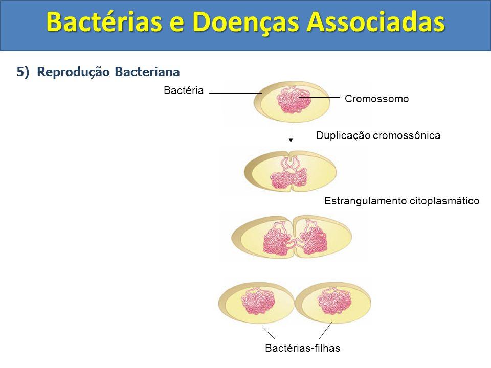 5) Reprodução Bacteriana Bactérias e Doenças Associadas Bactérias-filhas Estrangulamento citoplasmático Duplicação cromossônica Cromossomo Bactéria