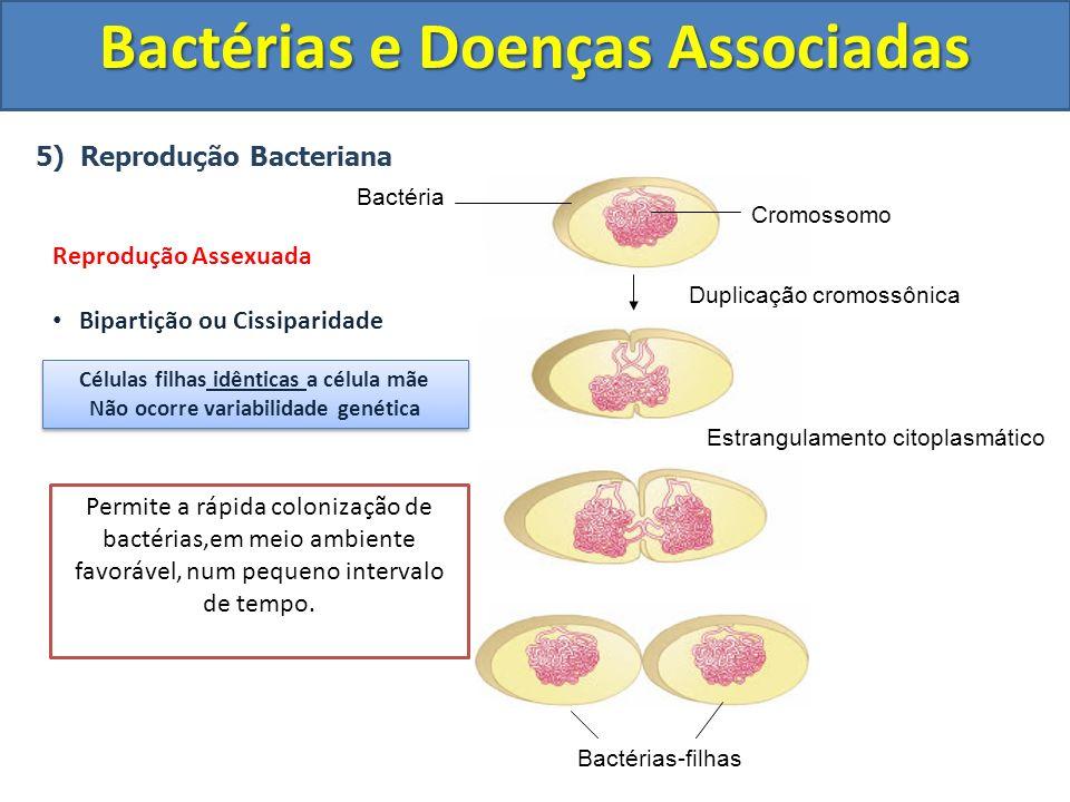 5) Reprodução Bacteriana Bactérias e Doenças Associadas Bactérias-filhas Estrangulamento citoplasmático Duplicação cromossônica Cromossomo Bactéria Re