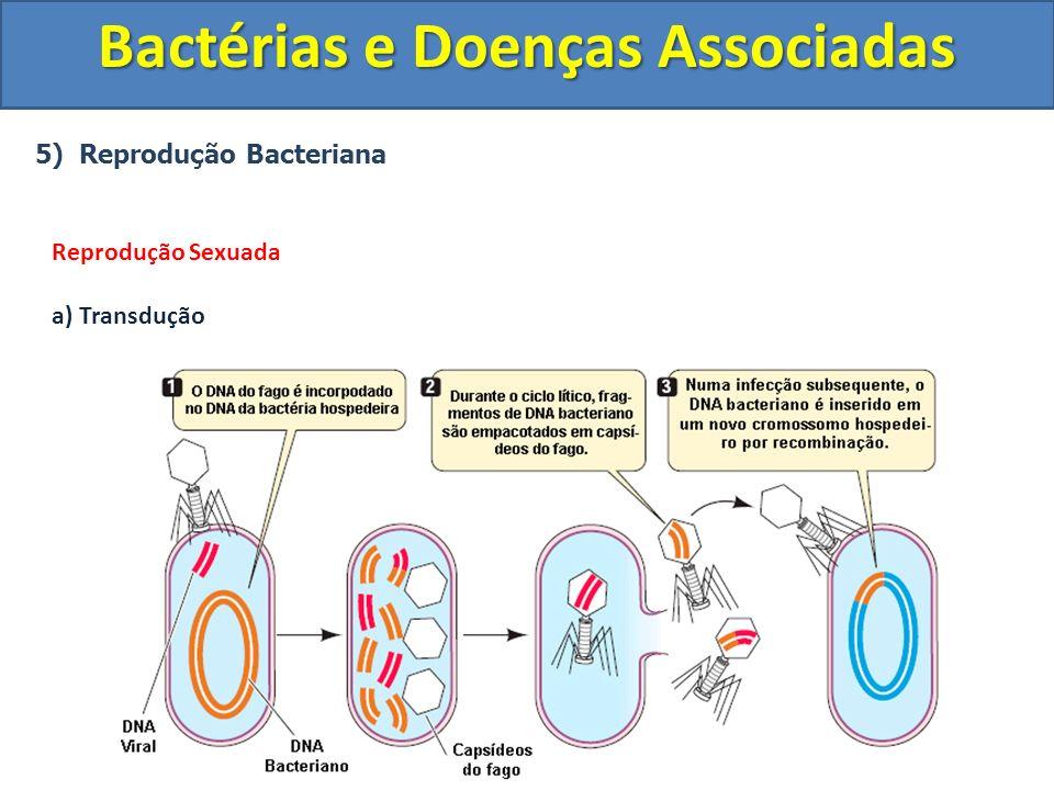 5) Reprodução Bacteriana Bactérias e Doenças Associadas Reprodução Sexuada a) Transdução