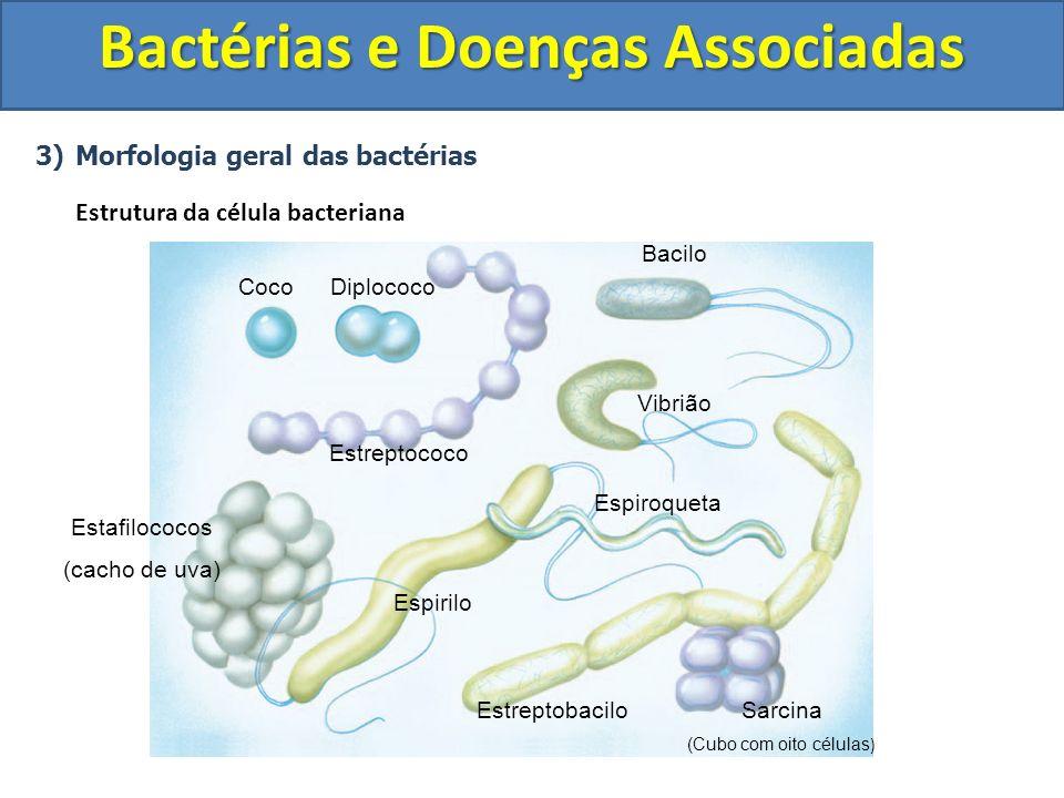 3)Morfologia geral das bactérias Estrutura da célula bacteriana Bactérias e Doenças Associadas CocoDiplococo Estreptococo Estafilococos (cacho de uva)