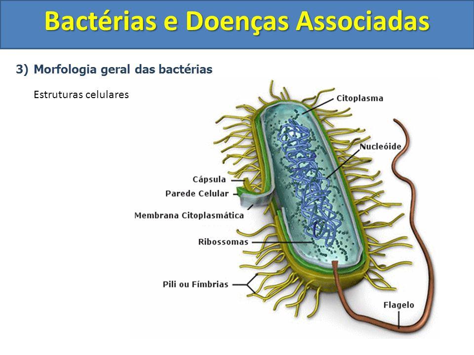 3)Morfologia geral das bactérias Estruturas celulares Bactérias e Doenças Associadas