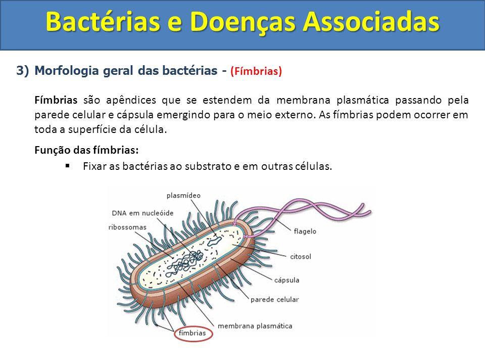 3)Morfologia geral das bactérias - (Fímbrias) Fímbrias são apêndices que se estendem da membrana plasmática passando pela parede celular e cápsula eme